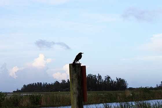 Bird on a Post 560