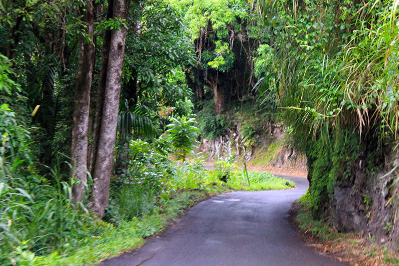 Tropical Road to Hana