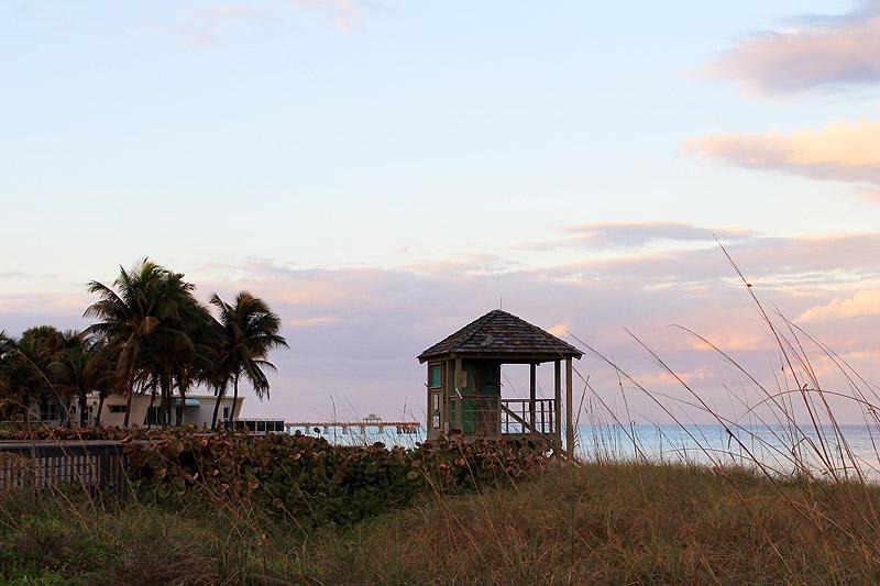 Grassy Beach View