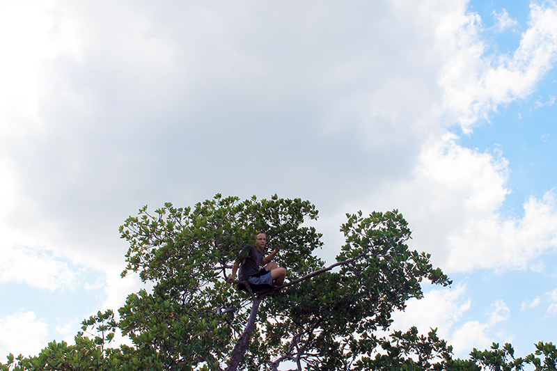 High in a Mangrove Tree
