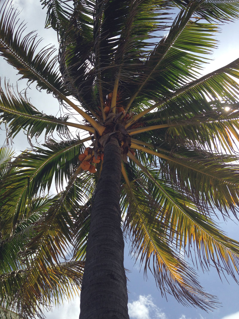 Palm From Beneath
