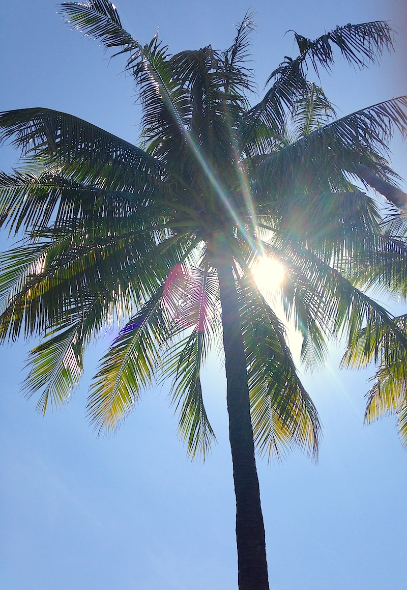 Palm with Sunshine Through