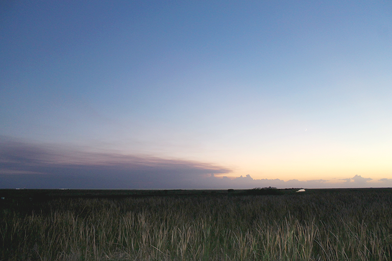 Everglades Sawgrass View