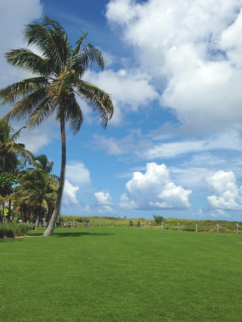 Grassy palms