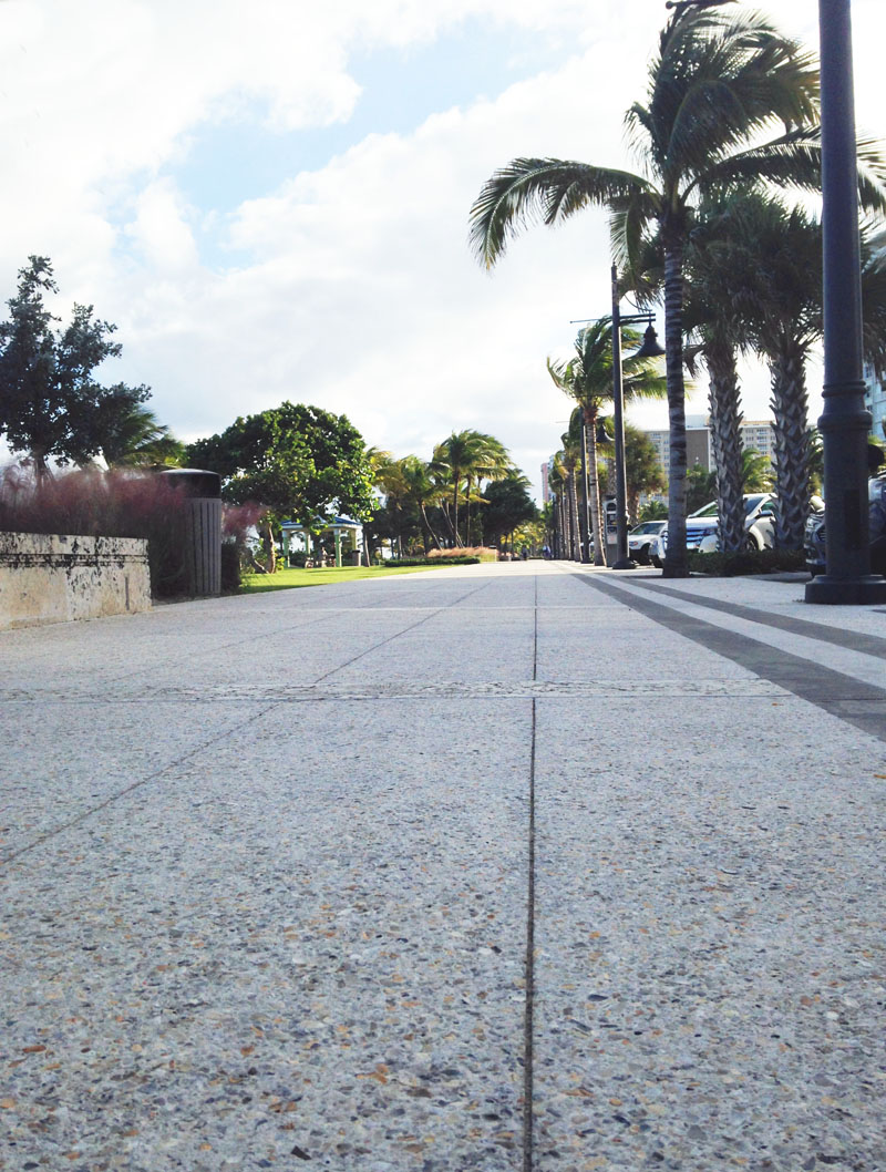 Palm Sidewalk View