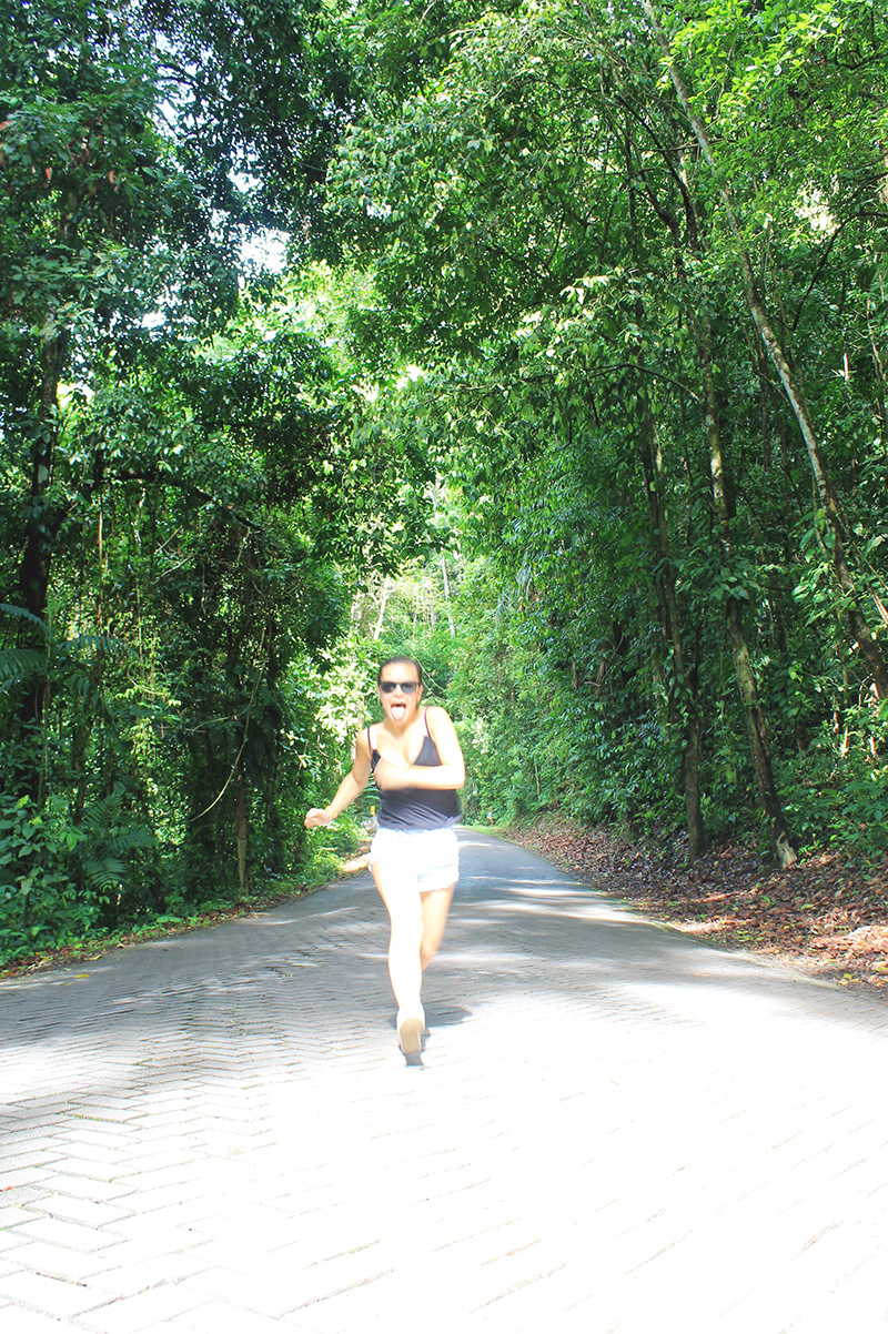 Dee Running Road in Rainforest