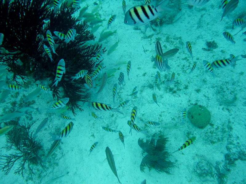 Reef Fish Small