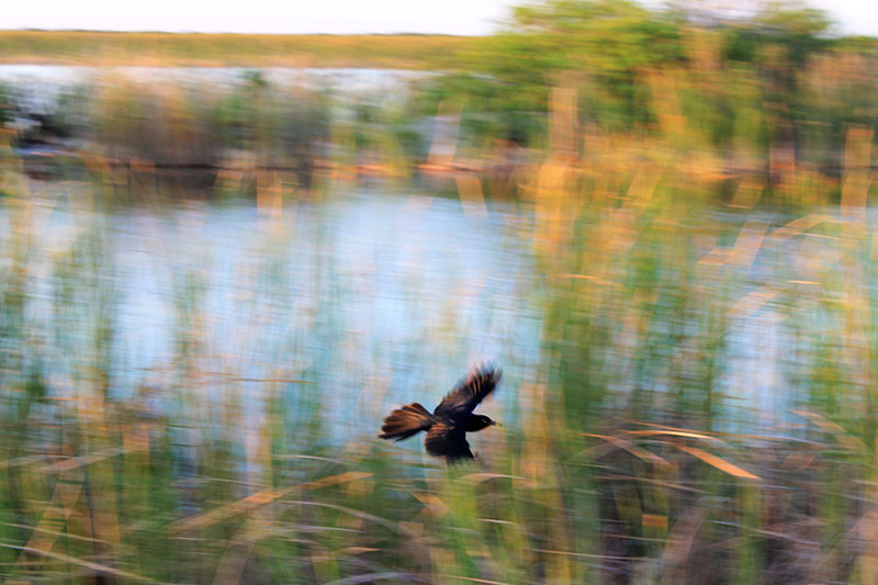 Blurry Bird Flying Small