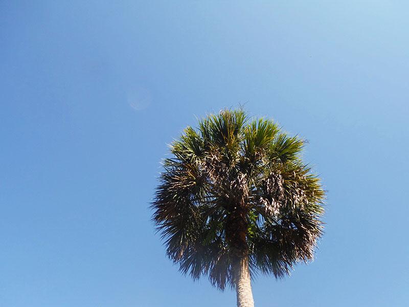 Palm Treee - Copy